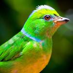 19- biodiversity small
